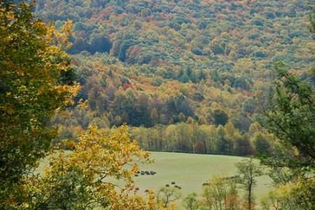 Blue Ridge Ashe County fall