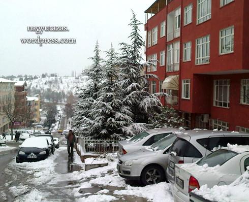 Hóval borított, hatalmas fenyőfák a török fővárosban