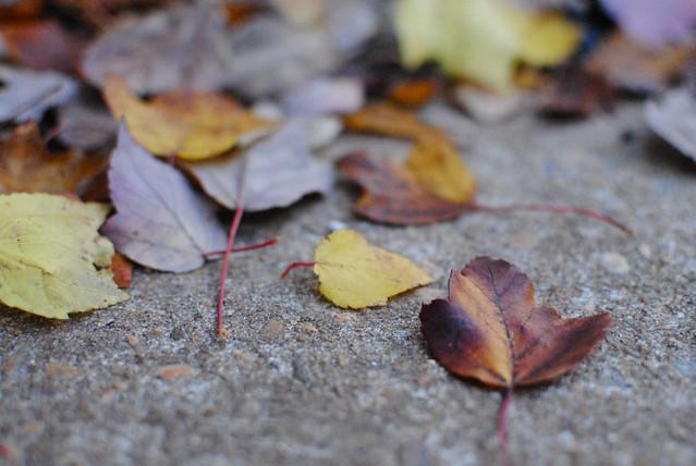 Fall/Fell