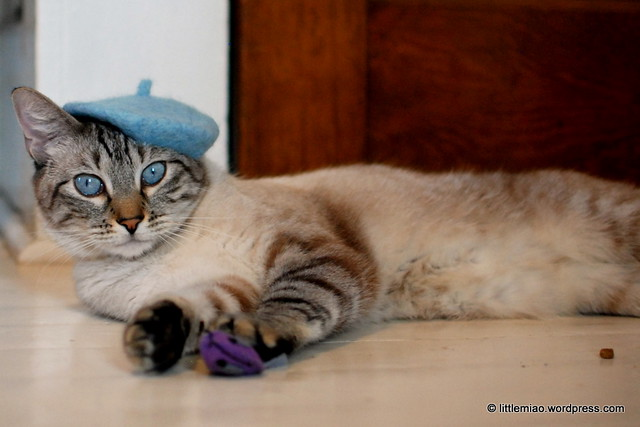 bluechoo 11-3-2011 10-49-08 AM