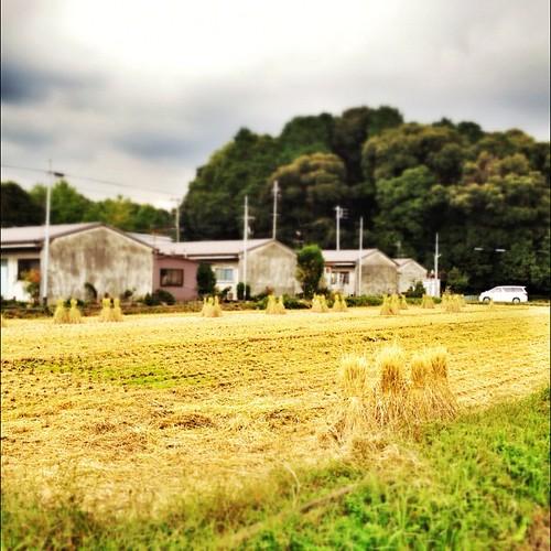 収穫の秋。  #autumn #iphonography #instagram #iphone4s