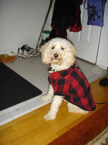 dog lumber jack costume