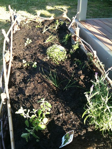 Wicker bed herbs