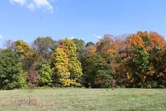 Autumn in The Morton Arboretum