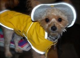 Lands' End raincoat