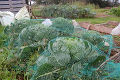 2011 10 16_allotment_0002