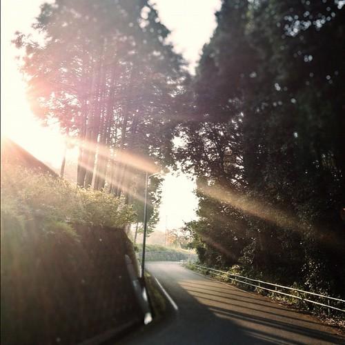 朝の光  #iphonography #instagram #iphone4s