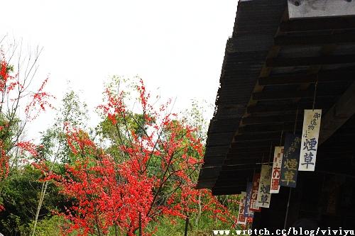 [旅遊.林口]賽德克巴萊.林口霧社街場景再造~上集 @VIVIYU小世界