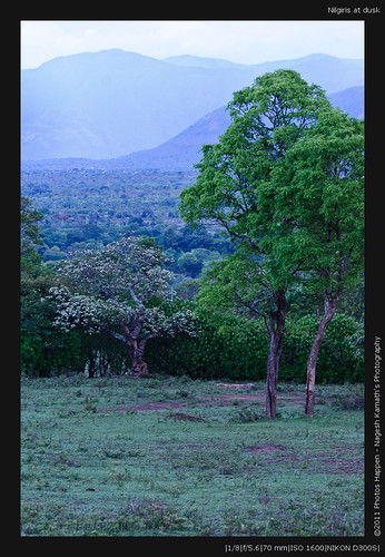 Nilgiris at dusk