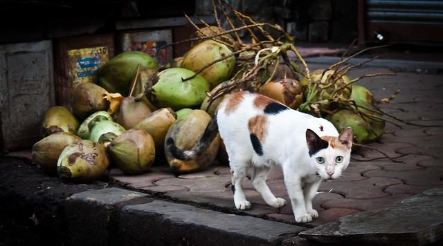 The Street Cat...