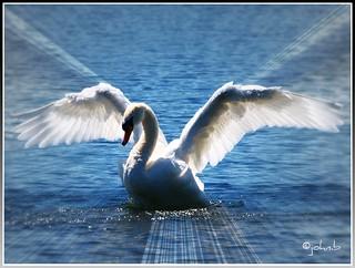 Angel-wings