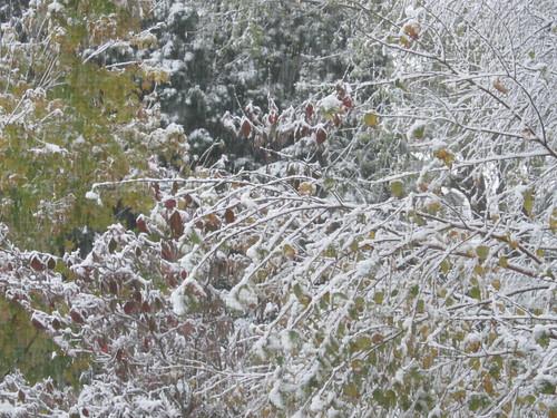 October Snowpocalypse