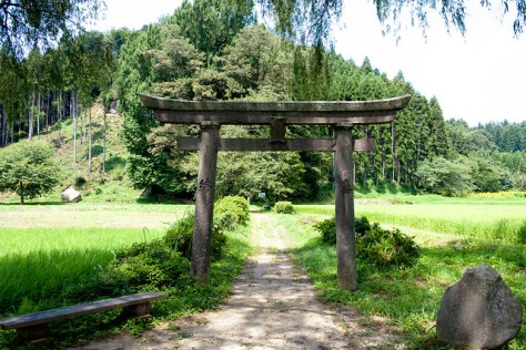 The Giant Trees of Tochigi: #78 The Giant Ginkgo of Kaminomiya