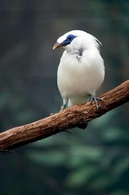 Pretty Bird 2