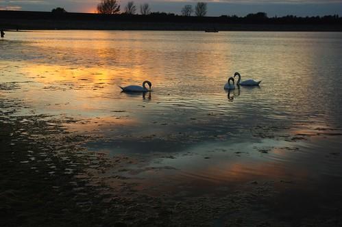 20110819-23_Sunset reflections + Swans_Rainbow Corner_Draycote Water by gary.hadden