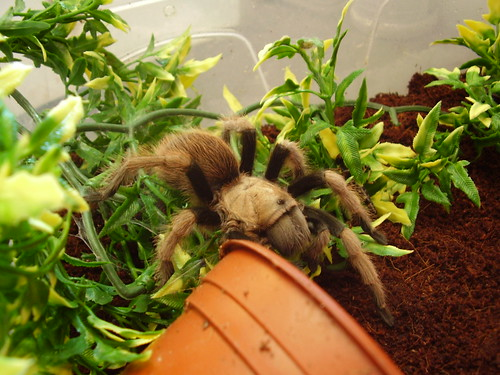 2011-08-20 Incey 02