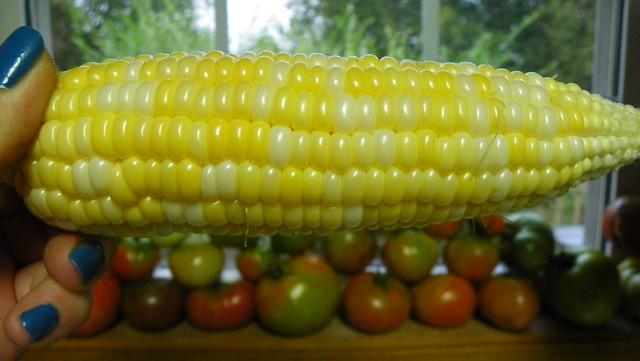 Sugar Dots Corn