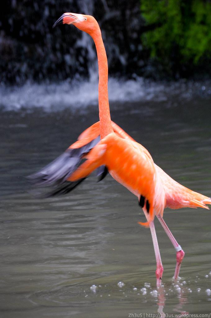 Jurong Birdpark (27 of 89)