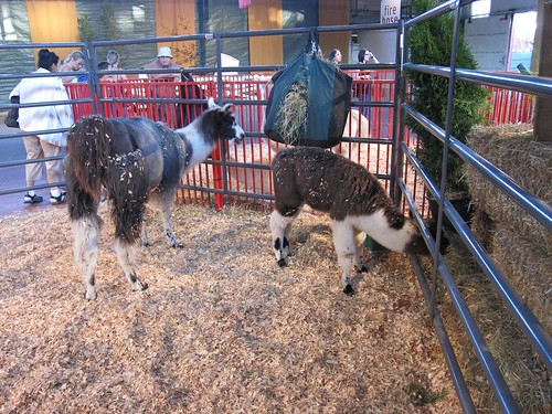 Llama & Babby Llama