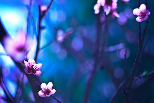 Spring's Return by Matt Hovey (on hiatus. back soon!)
