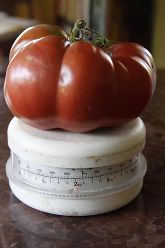 monster tomato