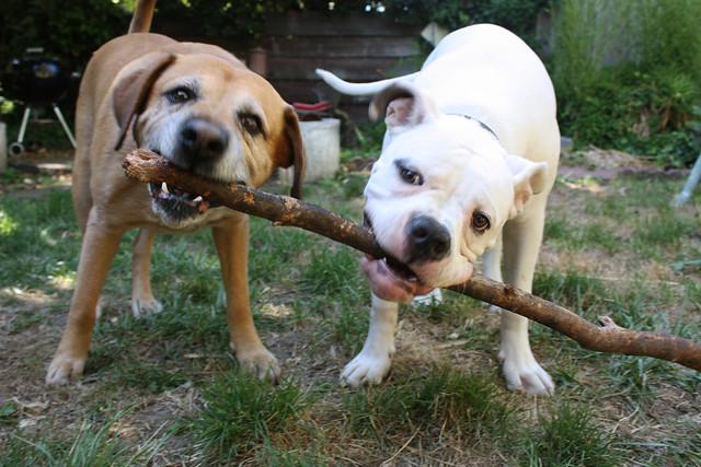 The Stick, part 1