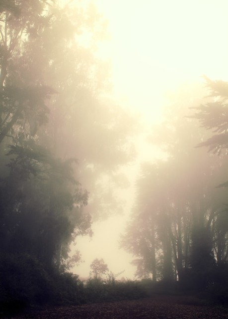 Mt. Davidson moody fog