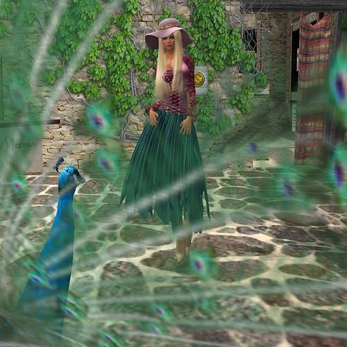 Through the Peacock