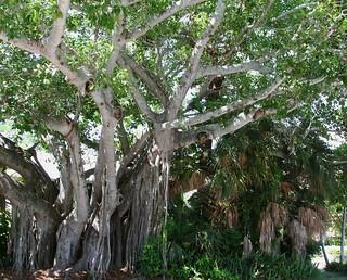 air root tree- cool!