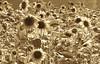 Sunflower Chaos by jkoci