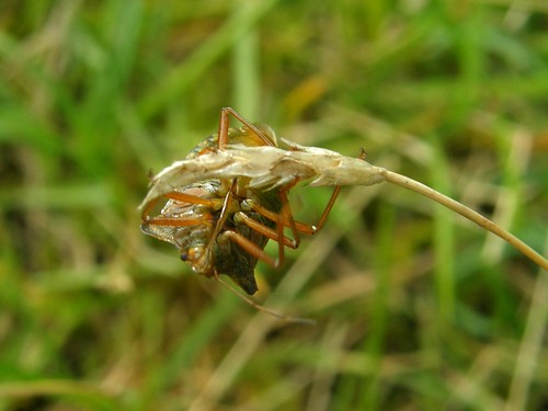 Forest bug again