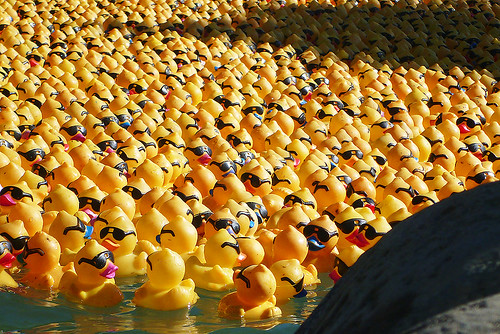 Here come the rubber duckies