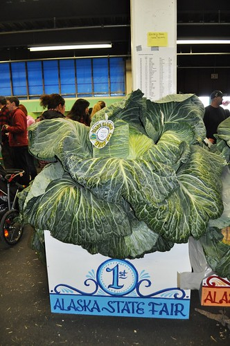 This is What a 126.4 Pound Cabbage Looks Like, 2011 Alaska State Fair