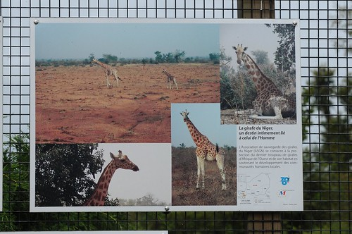 Im Zoo de Maubeuge