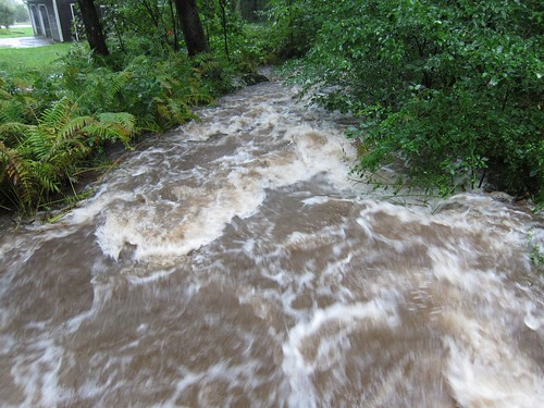 Our stream morning of Irene