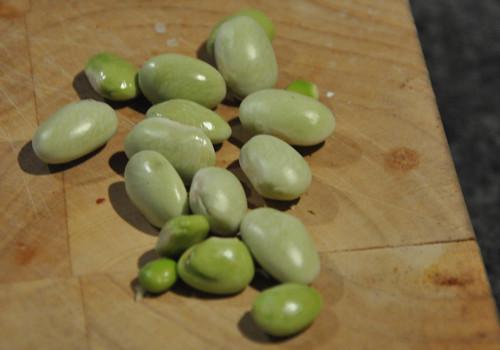 Bolotti Beans from growbox