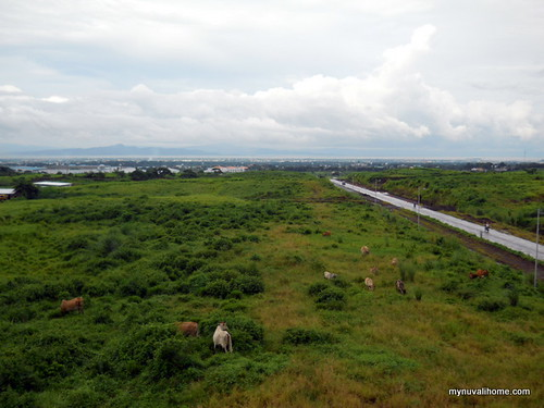 Venare, Nuvali Aug2011 (13)