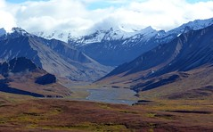 Mountains - Autumn in Denali