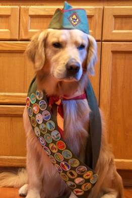 Image result for dog with a merit badge sash