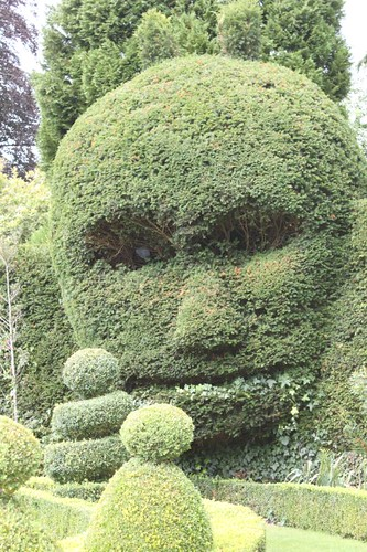 20110805_IMG_1481_topiary-face