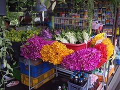 Orchids, Taling Chan, Bangkok