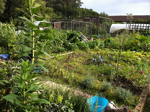 allotment 2011
