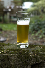 Beer Glass by Schott Zwiesel