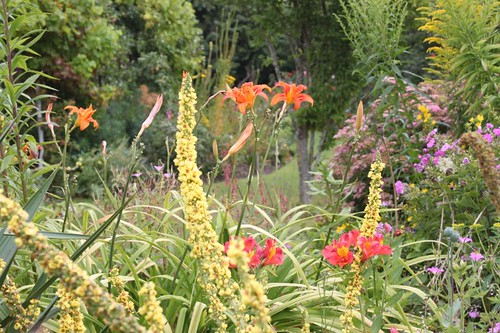 20110805_IMG_1529_herbaceous-border