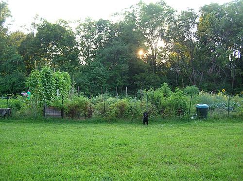 Simon and the garden