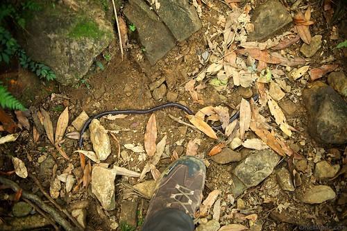 Giant worm in Taiwan