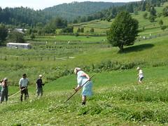 Transylvania scythe competition