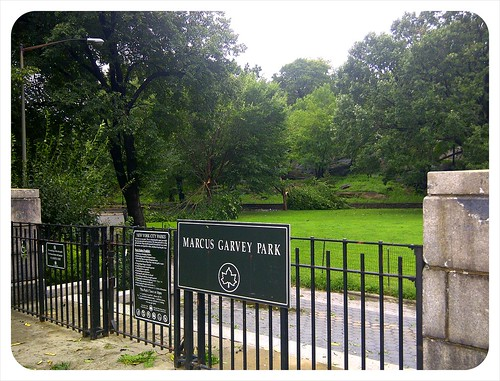 damaged trees, Marcus Garvey Park