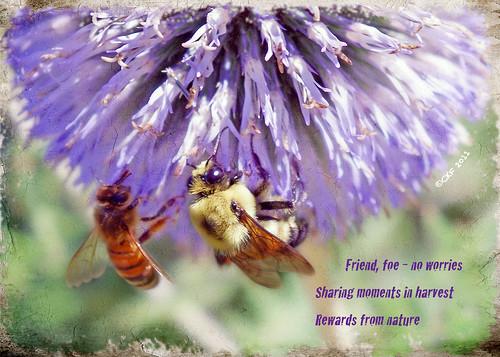 Bees Sharing Haiga