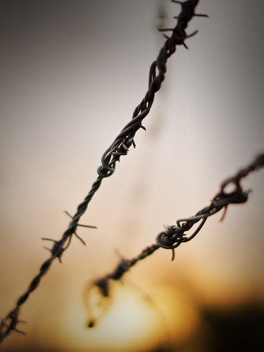 barbed sunset by Matt Hovey
